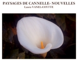 Le livre PAYSAGES DE CANNELLE- NOUVELLES