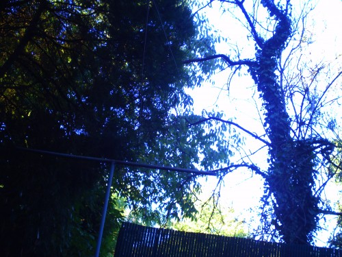 31juillet 2010 001.jpg