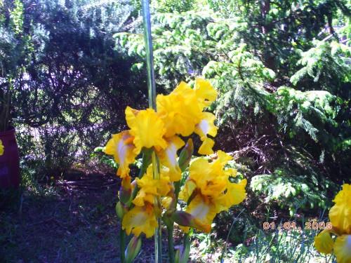 nature 7 mai 2009 002.jpg