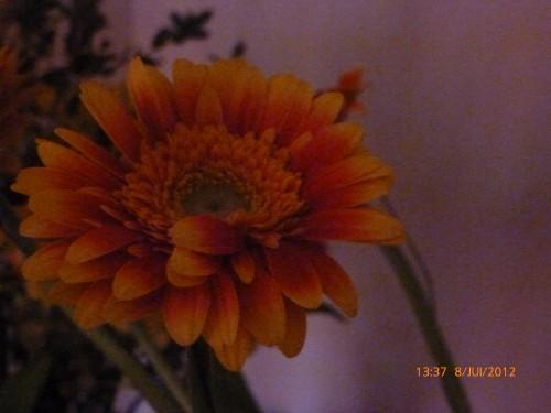 fleurs 8 juillet 2012 005.jpg