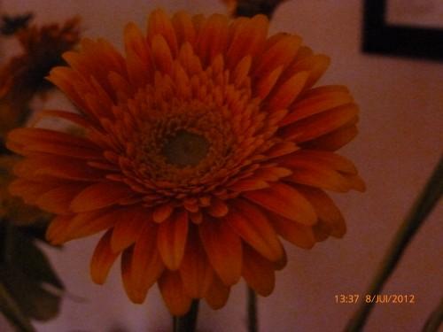 fleurs 8 juillet 2012 004.jpg