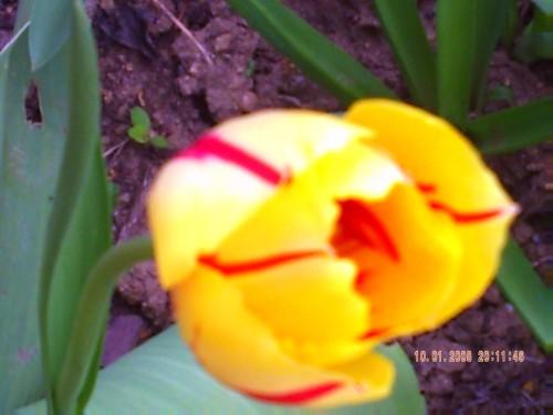 Avril 2009 005.jpg