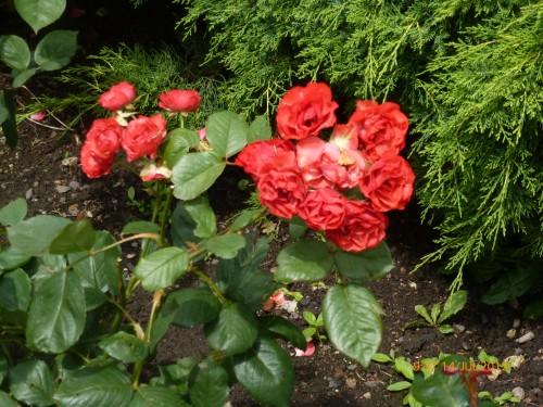 roanne -st quentin 13-14 juillet 2012 038.jpg