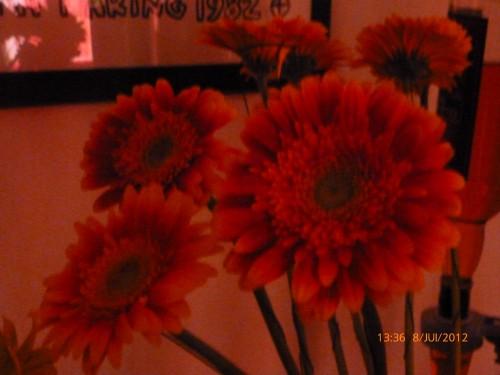 fleurs 8 juillet 2012 002.jpg