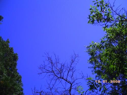 NATURE 19 mai 2009 017.jpg