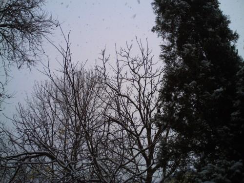 décembre 2009 013.jpg