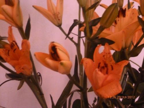 ste bouquet 28 juillet 2012 006.jpg