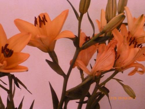 ste bouquet 28 juillet 2012 007.jpg