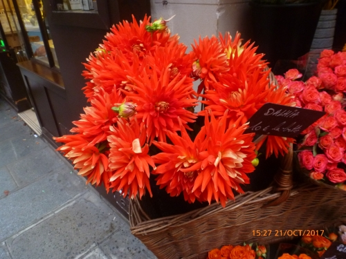 dahlias paris 21 oct 2017.JPG