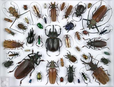 scarabees.jpg