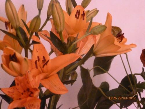 ste bouquet 28 juillet 2012 005.jpg