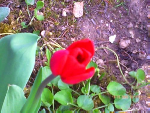Avril 2009 004.jpg