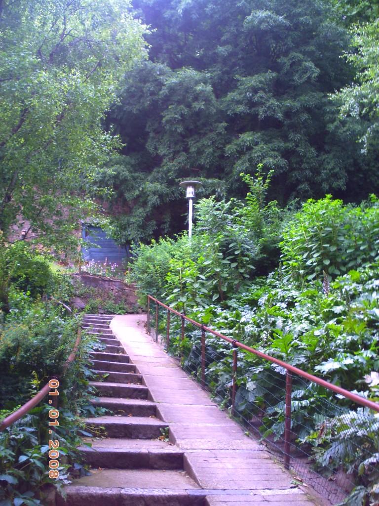 Lyon jardin des chartreux laura vanel coytte ce que j for Le jardin 69008 lyon