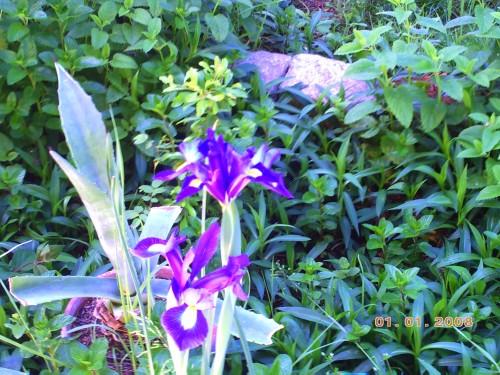 nature 7 mai 2009 019.jpg