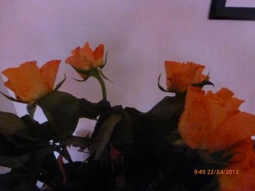 bouquet 22 juillet 2012 003.jpg