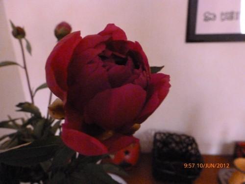 bouquet 10 juin 2012 002.jpg