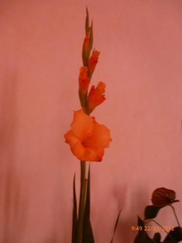 bouquet 22 juillet 2012 005.jpg