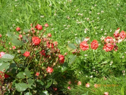 roanne -st quentin 13-14 juillet 2012 036.jpg