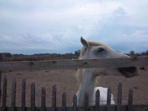 chevaux100_1841.JPG