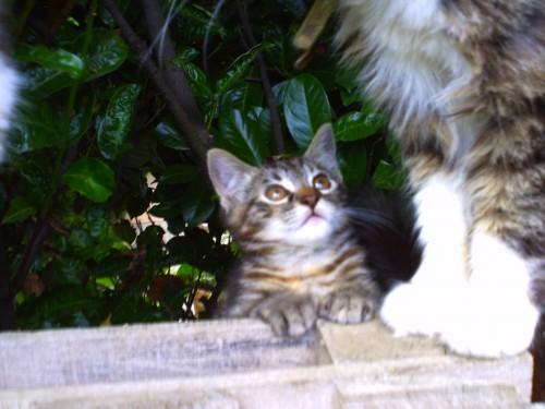 chats 29 juin 2010 003.jpg