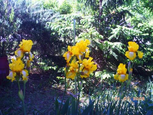 nature 7 mai 2009 001.jpg